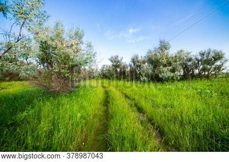 Summer Landscape With Green Grass, Road And Blue Sky.