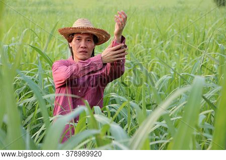 Man Farmer Standing And Folding Up The Sleeves, He Wearing A Straw Hat With Red Long-sleeved Shirt I