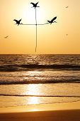 Beautiful & heavenly seaside in the evening with birds carrying thread shaped as holy cross. The evening sky is lit by the setting sun with birds flying above the beach & sea reflecting the sunlight poster