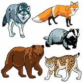 set with wild animals,predators,forest beasts,vector images isolated on white background poster