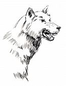 Picture of a grinning wolf. White backround. poster