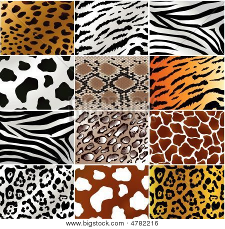 Different Animals And Snakes Skins