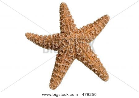 Clipped Starfish
