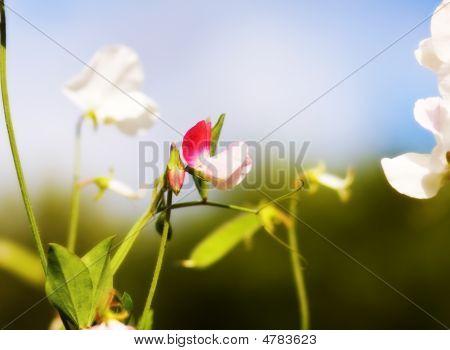 Spring Celebration With Garden Flowers
