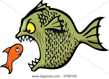 Bully Fish