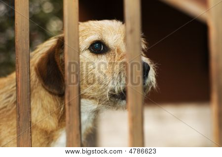 Caged Dog