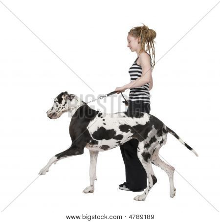 poster of young girl walking his dog (Great dane 4 years) harlequin Great Danein front of a white background