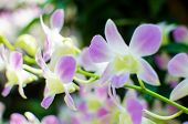 Beautiful bright orchid flowers in Botanical garden close-up details poster