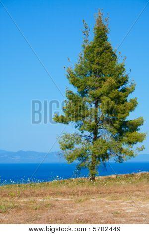 One Tree.
