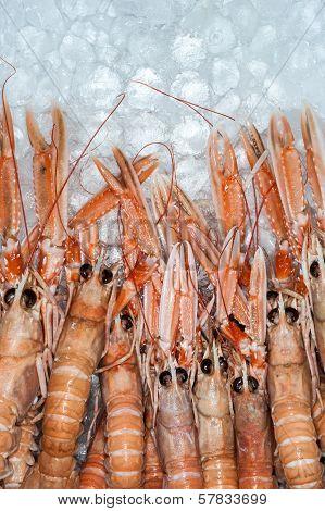 fresh dublin bay prawns on ice background poster