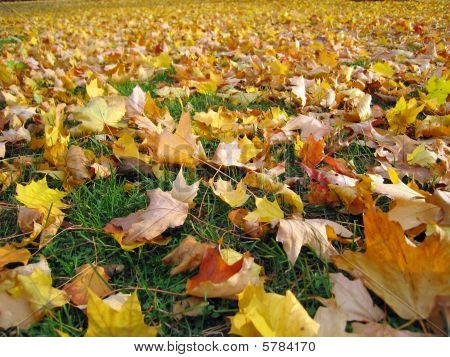 Field Of Fall Leaves
