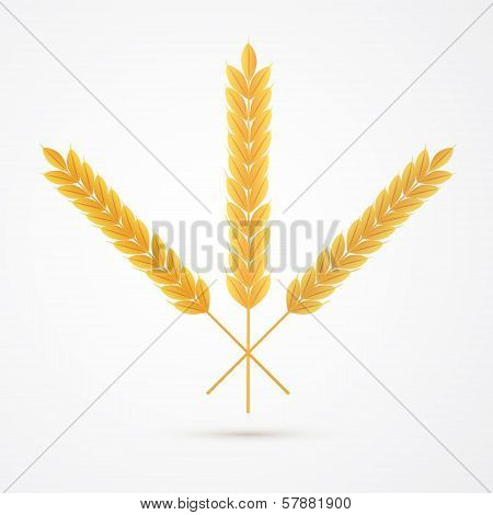 Vector Ears Of Wheats Isolated On White Background