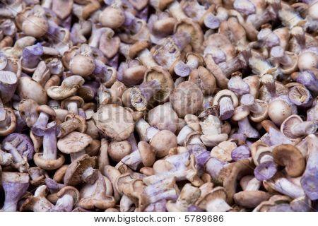 Mushrooms With Blue Stem