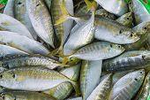 Close up of short mackerel or shortbodied mackerel (Rastrelliger brachysoma) in green basket for sale poster