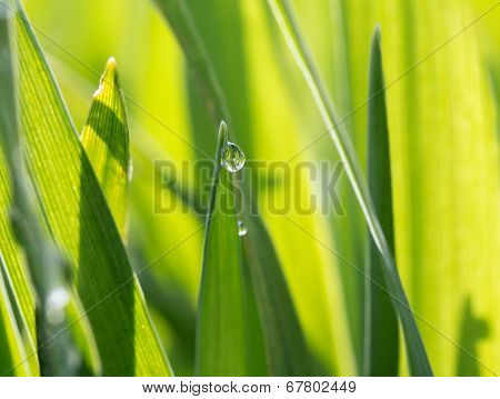 The dewdrops on the green grass in the sunshine poster