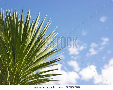 Spike-leafed Plant