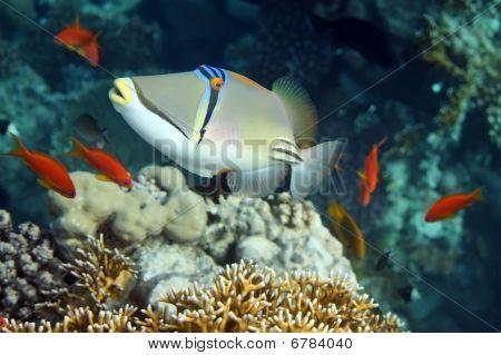 Korálové ryby