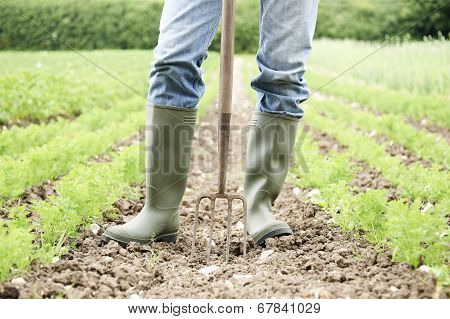 Close Up Of Farmer Working In Organic Farm Field