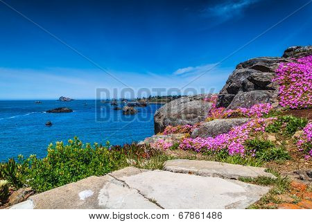 Flowers And The Ocean