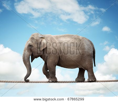 Elephant balancing on a tightrope concept for risk, conquering adversity and achievement