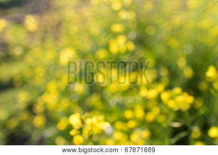 abstract flowers background with natural bokeh