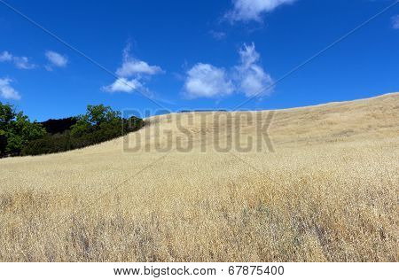 Dry brown grass on a hill
