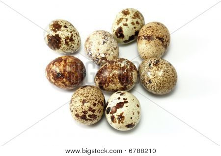 Quail Eggs with different colors and patterns