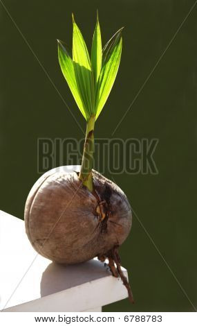 shoots of coconut as the next-generation successor poster