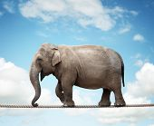 Elephant balancing on a tightrope concept for risk, conquering adversity and achievement poster