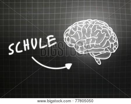Schule Brain Background Knowledge Science Blackboard Gray