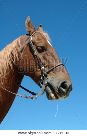 horse foaming at mouth