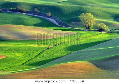 Farmland In Palouse Washington