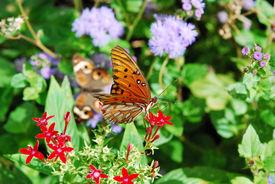 Climbing Butterfly