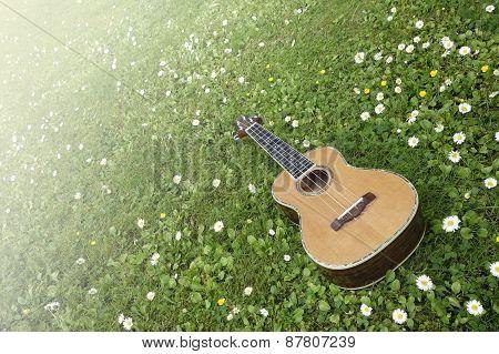 Ukulele Spring Dream