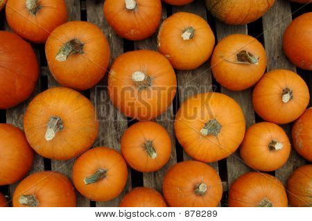 Pumpkins On Pallet