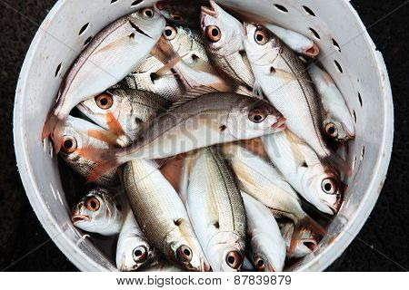 Fresh recently caught fish