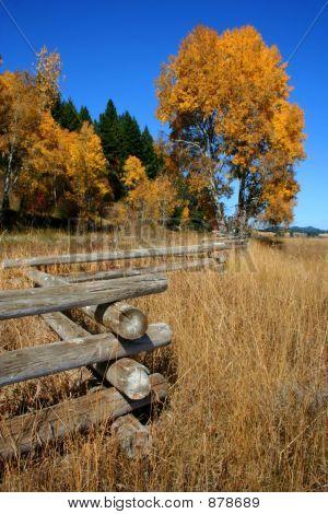 Autumn Fence 2
