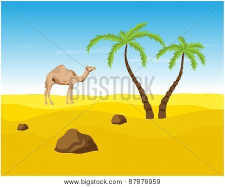 Camel and palms in the Desert, oasis vector illustration.
