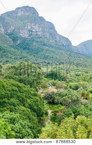 View Across Part Of The Kirstenbosch Botanical Gardens