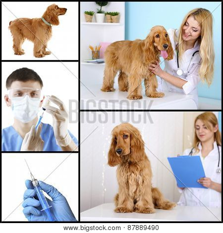 Vaccination and treatment of animals, collage