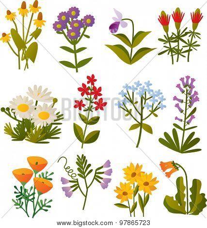 set of vector cartoon north american wild flowers