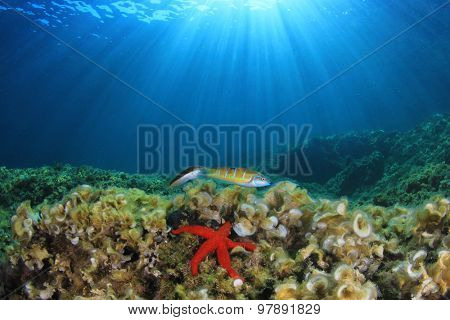 Underwater reef and starfish in sunlight