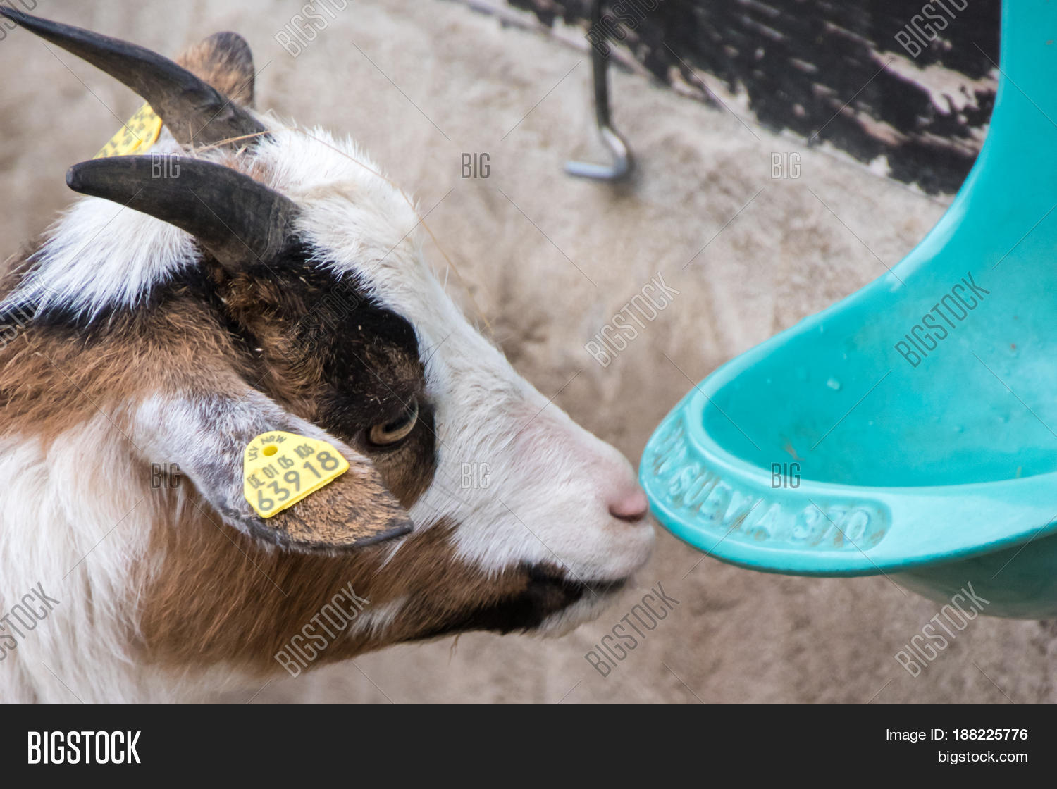 head young baby goat image photo free trial bigstock