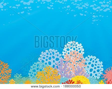 Tropical coral reef. Illustration of a sea bottom with corals and water plants