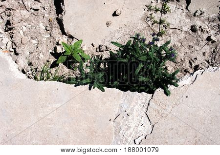 Collapse in the soil where a plant has grown in the bottom and there is another plant arrives