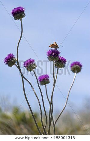 Meadow in springtime butterfly on purple flower