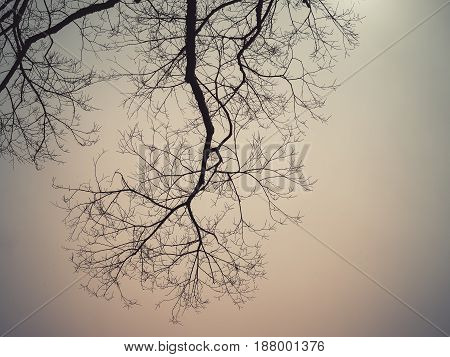 Leafless branches of sakura tree against sky, Retro filter color