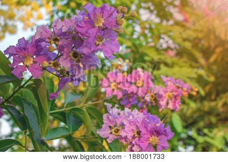 Purple Flowers; Purple flowers in the beautiful garden