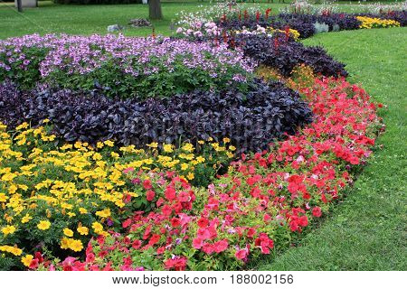 Flowerbed full of flowers in the park, Budapest, Hungary