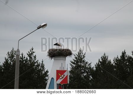 beautiful bird white stork( mother) feeding her chicks in big nest in rainy spring day